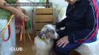 Video «Der Therapiehund im Palliativzentrum Hildegard in Basel» abspielen