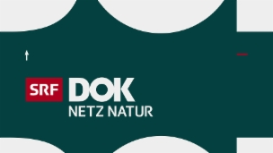 Link öffnet eine Lightbox. Video NETZ Natur vom 26.09.2016 abspielen.