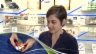 Video «Hirn-Training mit der Gedächtnis-Weltmeisterin» abspielen