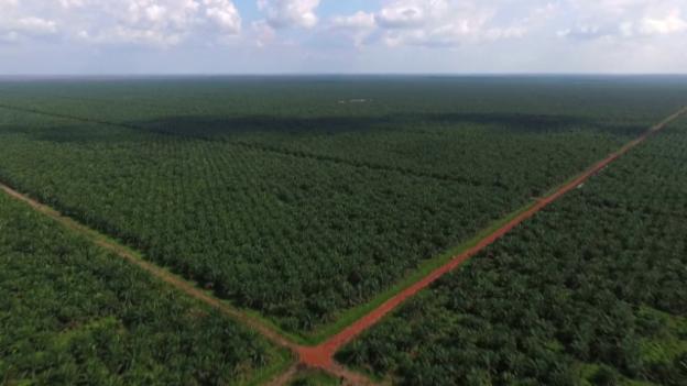 Video «Palmöl in unseren Lebensmitteln: Der versteckte Klimakiller» abspielen
