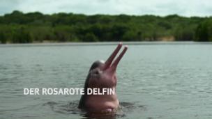 Link öffnet eine Lightbox. Video Der rosarote Delfin abspielen.