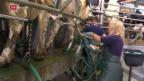 Video «FOKUS: Milchmarkt am Boden» abspielen