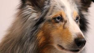 Link öffnet eine Lightbox. Video Von Hunden und Menschen - Beste Freunde (1/3) abspielen.