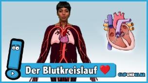 Video «Was macht dein Herz genau?» abspielen