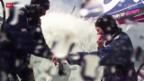 Video «Segeln: Zwei Schweizerinnen an der Weltumseglung» abspielen