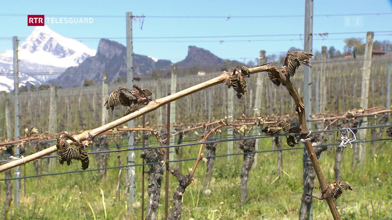 Viticulturs cumbattan la fradaglia