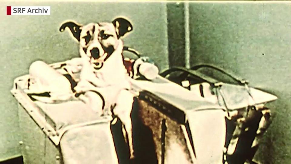 Vor 60 Jahren startete Laika ins All