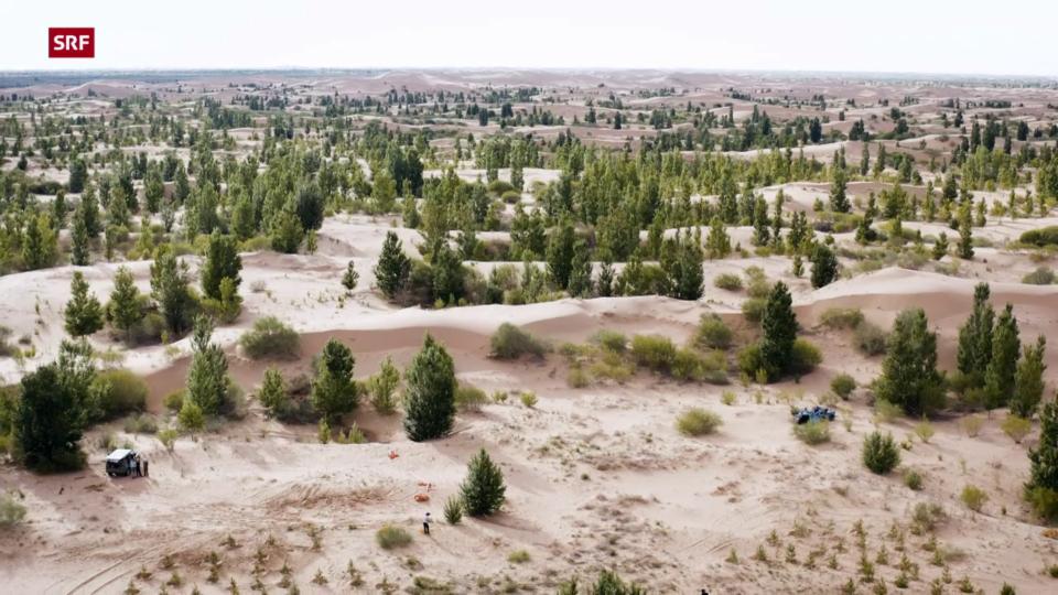 Aufforstungsprogramm in China soll Ausbreitung der Wüste stoppen