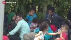 Video «Flüchtlinge an der serbisch-ungarischen Grenze – eine Reportage» abspielen