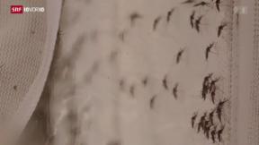 Video «Zika-Virus erreicht die Schweiz» abspielen