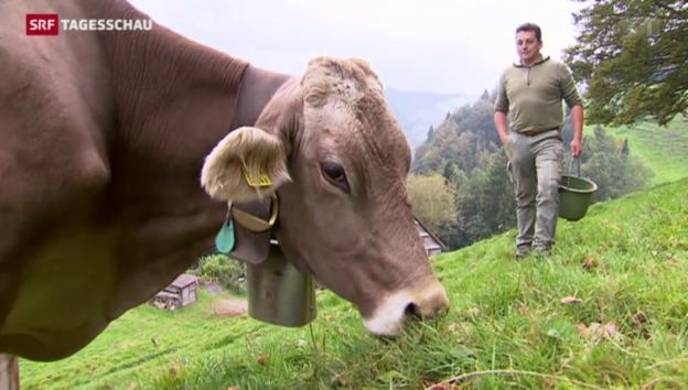 Video «Glockengebimmel schadet den Kühen» abspielen