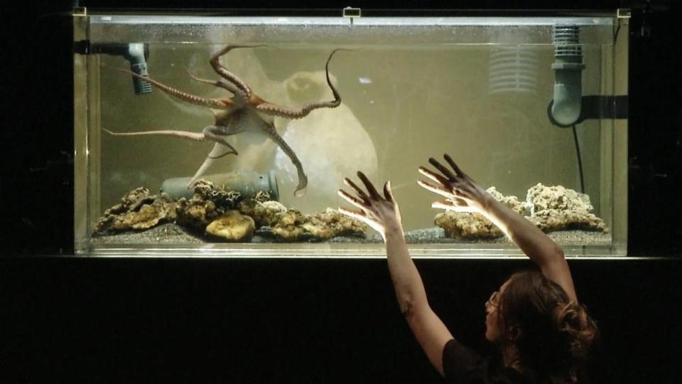 Kunst von Mensch und Tier: Krake auf der Bühne