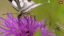 Link öffnet eine Lightbox. Video Insektenbestand geht dramatisch zurück abspielen