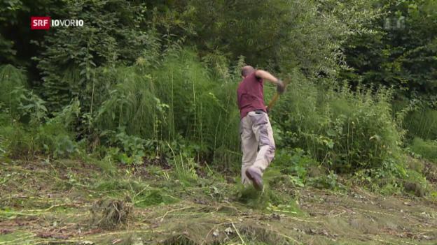 Video «Der Zivildienst soll an Attraktivität verlieren» abspielen