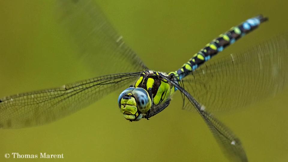 NMG: Das geheimnisvolle Leben der Libellen (1/2)