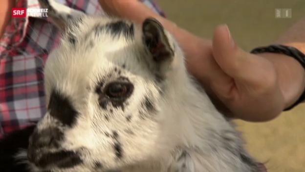 Video «Therapie mit Hilfe von Tieren» abspielen