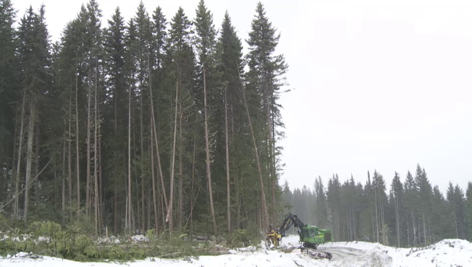 «Cut some trees...»