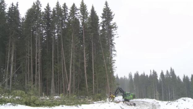 Video ««Cut some trees...»» abspielen