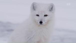 Link öffnet eine Lightbox. Video Überleben in der Wildnis – Die Welt entdecken (1/2) abspielen.