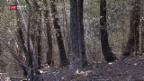 Video «Brand zerstört Naturschutzgebiet» abspielen