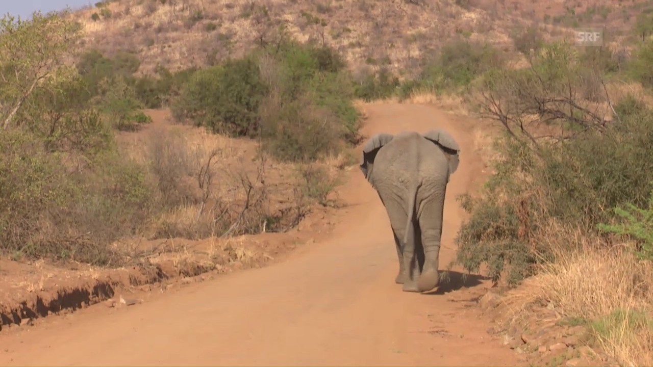 Unterwegs für den Elefantenschutz in Südafrika