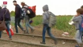 Video «Kein Anstieg der Asylgesuche in der Schweiz » abspielen