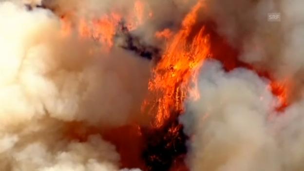 Video «Luftbilder der Feuerbekämpfung in Texas (unkommentiert)» abspielen