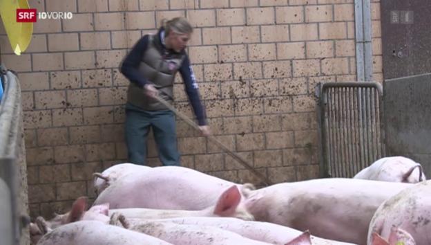 Video «Keine Freude an Hobby-Bauern (10vor10 vom 04. September 2015)» abspielen