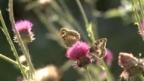 Video «Artenschutz durchs Objektiv» abspielen