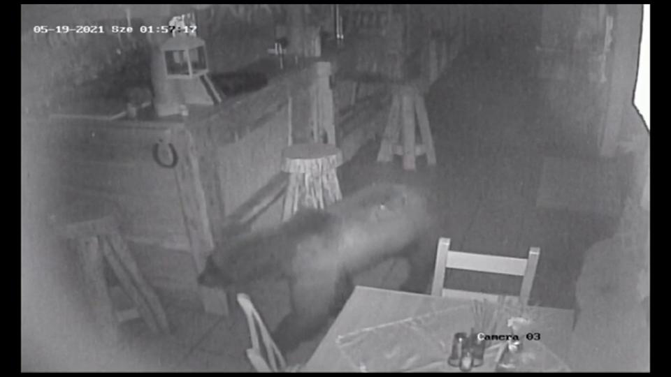 Der Bär sucht das Restaurant in Micfalau heim