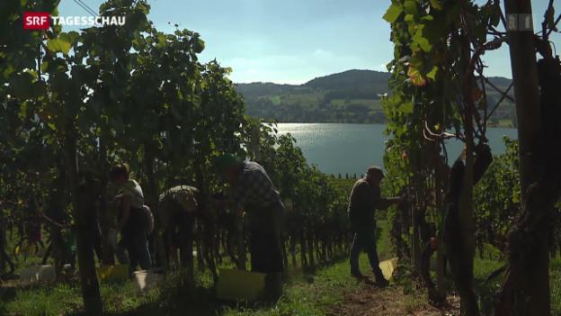 Video «2015: Ein guter Wein-Jahrgang» abspielen