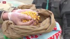 Video «Brachliegende Entwicklungshilfe in der Ukraine» abspielen