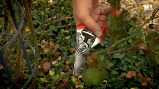 04.10.11: Welche Gartenscheren gut abschneiden