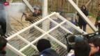Video «Flüchtlinge versuchen Grenzzaun nach Mazedonien zu durchbrechen» abspielen