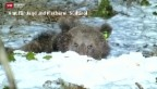 Video «M25 reisst Esel» abspielen