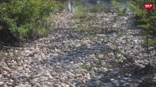 Link öffnet eine Lightbox. Video Tausende tote Fische treiben auf Fluss in Paraguay abspielen