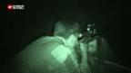 Video «Wildschwein-Invasion» abspielen