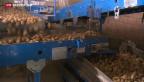 Video «Bauernverband lanciert Initiative für Ernährungssicherheit» abspielen
