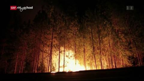 Die grössten Naturkatastrophen: Waldbrände (1/6)