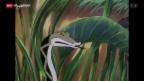 Video «D'Tier vom grosse Wald (7/11)» abspielen
