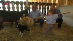 Video «Agrotourismus – Ferien auf dem Bauernhof» abspielen