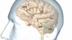 Video «Placebo und Nocebo: Wenn «nichts» viel bewirkt» abspielen