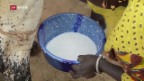 Video «FOKUS: Importmilch ruiniert afrikanische Bauern» abspielen