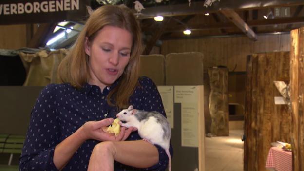 Video «SBB: Grüne Welle, Pflanzengespür, Ratten» abspielen