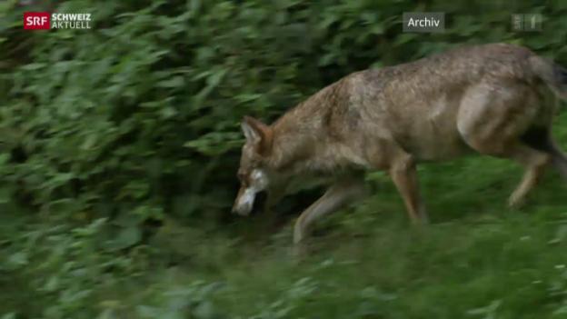 Video «Schweiz aktuell vom 13.08.2015» abspielen