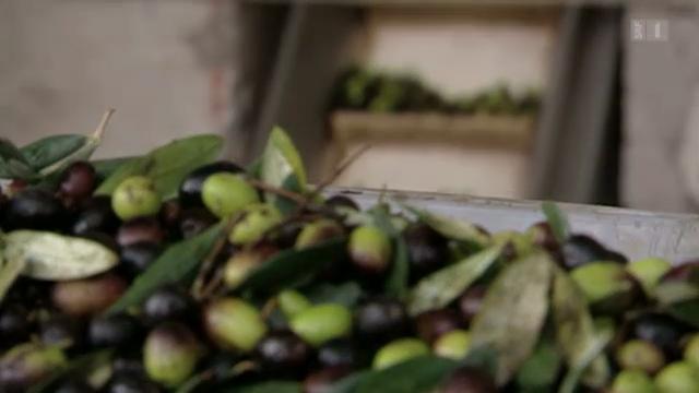 Olivenöl sättigt