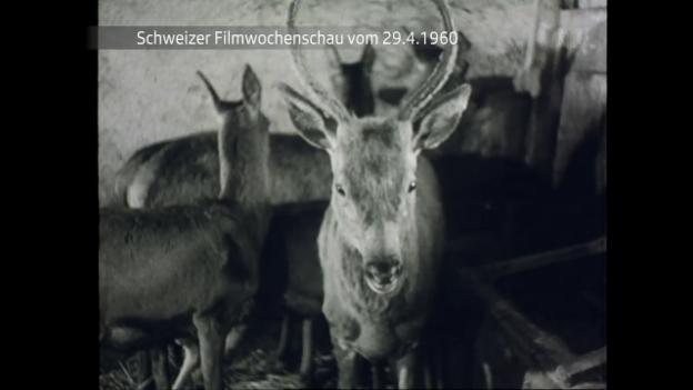 Video «Vom 29.4.1960» abspielen