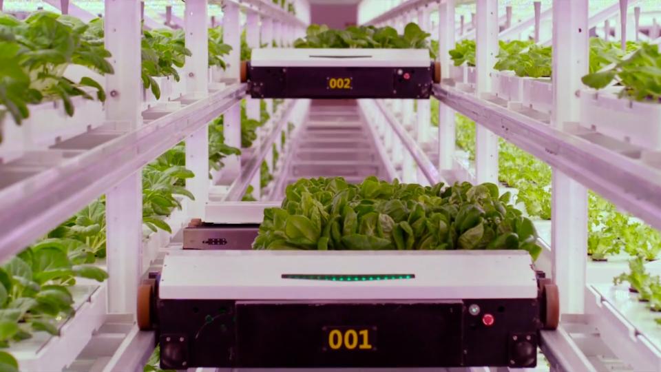 Ist Vertical Farming die Landwirtschaft der Zukunft?