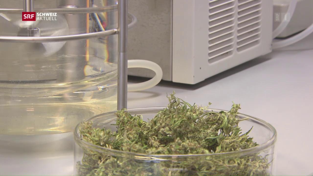 Cannabis für Schmerzpatienten