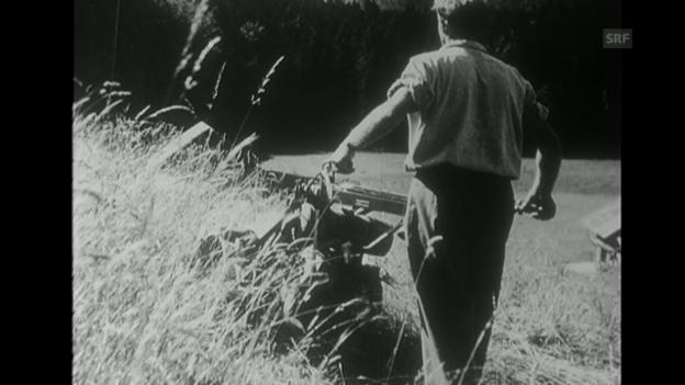 Video «Sektor Feld und Wald (24.7.1964)» abspielen